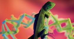 LizardTech